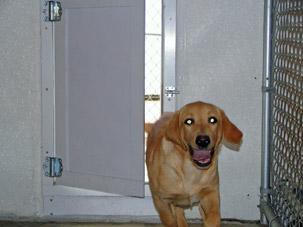 products weather seal pet door